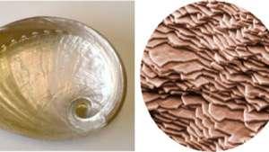 Abalone shell.