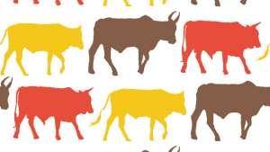 Transkei Cows - textile design.