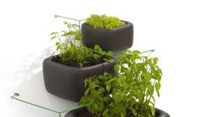 Haldane Martin: Wallflower vertical garden system