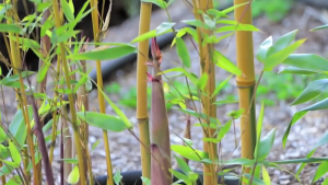 Bamboo Engineering by MIT.