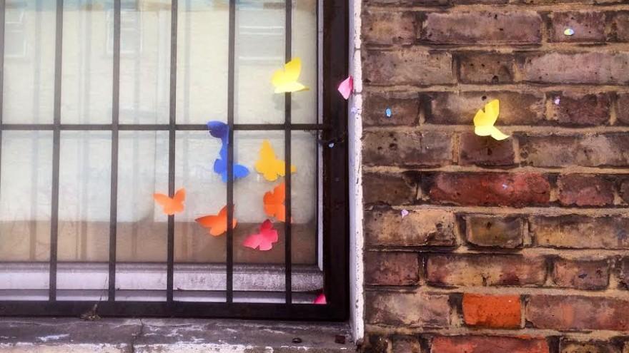 Andrew Shoben butterflies