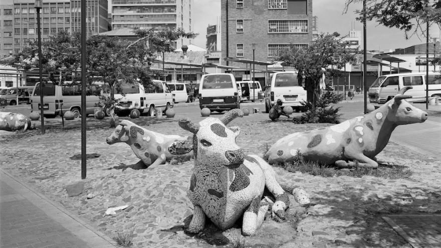 Cows at a taxi rank on Error Street, New Doornfontein, Johannesburg. 8 December 2012. Image: David Goldblatt.