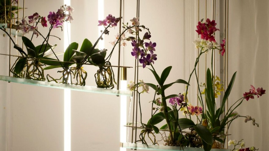 Flow is an indoor ecosystem designed by Begum and Bike Ayaskan, which mimics the sensory experience of nature.