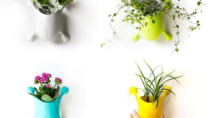 Livi brings nature indoors   Design Indaba