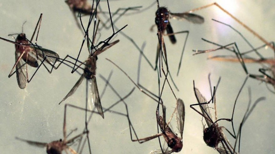 It's hard to view mosquitoes as a deadly animal, but they are if infected with Malaria.