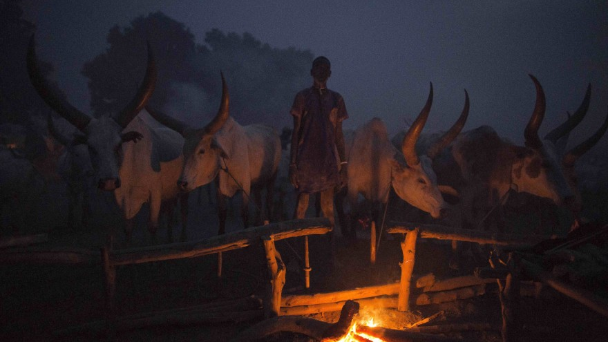 A young Mundari man keeps watch over the fire and his cows during the night. Image:© Tariq Zaidi / ZUMA Press