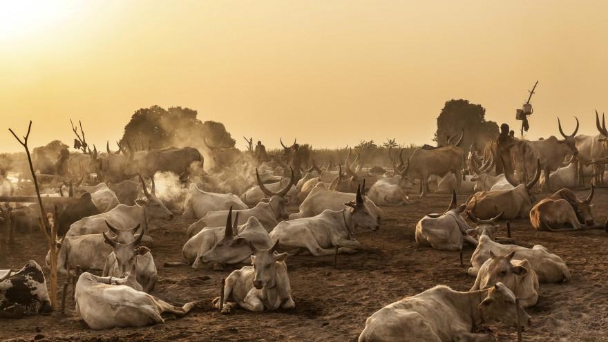 Dawn breaks over a Mundari cattle camp. Image:© Tariq Zaidi / ZUMA Press