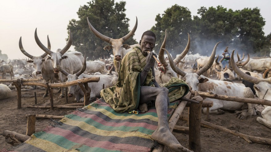 A Mundari man wakes up next to his animals and brushes his teeth with a stick. Image:© Tariq Zaidi / ZUMA Press