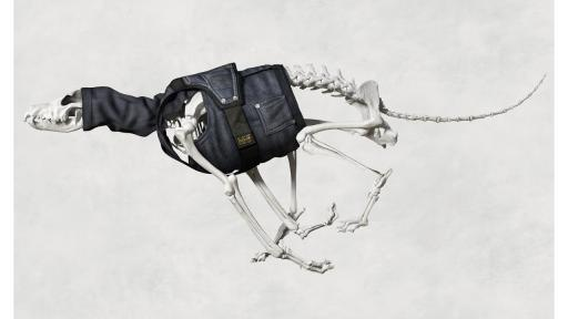 G-Star RAW Skeleton Dog. Image: G-Star RAW.