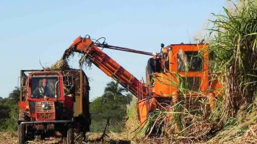 Fibre waste from sugarcane can be used as a biofuel