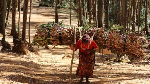 Martha Tadesse captures Ethiopian wood carriers