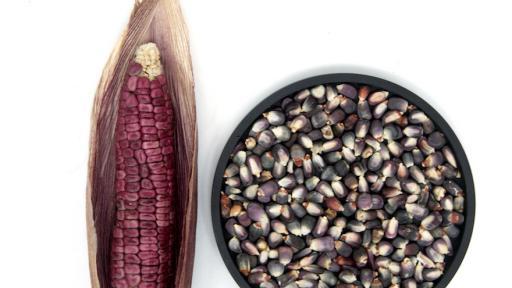 Native Mexican Corn