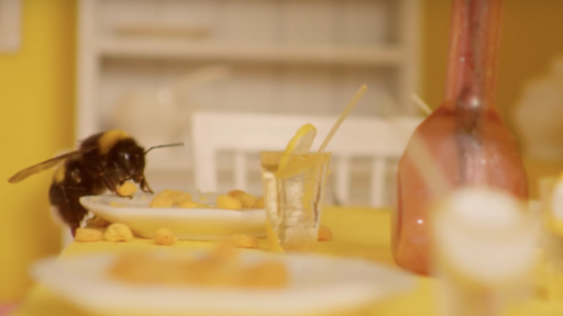 Quirky Beedapast Hotel houses travelling bees