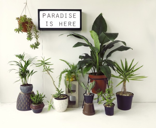 Paradise is Here by Heather Moore of Skinny LaMinx.