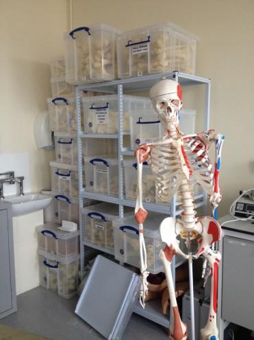MSk Lab, Charing Cross Hospital.