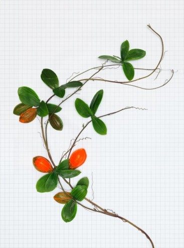 PlantFictions. Photo: Troika, 2010.
