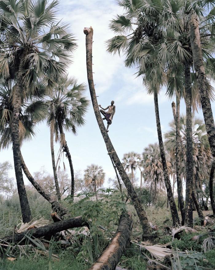Kyle Weeks: Palm Wine Collectors