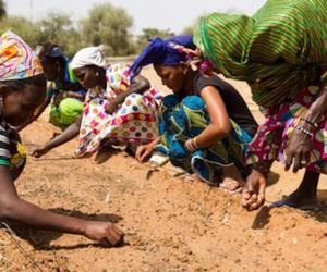 An area in the Sahara  reclaimed through mans intervention. Image: Venturethree.com