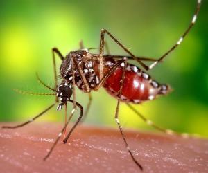 World Malaria Day 2017