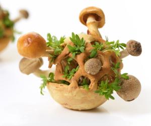 Edible Growth morsel