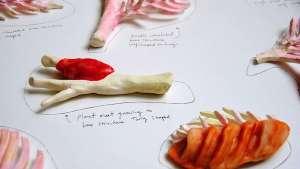 Plant Bones by Marije Vogelzang