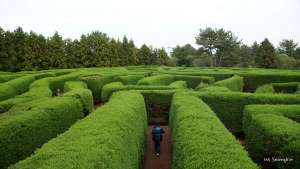 The way participants perform in the virtual maze gives researchers insight into their condition. Image Source: Flickr