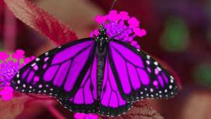 The Butterfly Effect – a walk-through tropical butterfly experience celebrating pollination