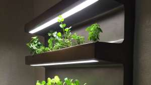 edn planter
