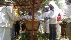 Beekeeping in Uganda