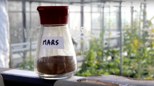 Scientists at Wageningen University have successfully grown edible cereals and vegetables including peas, radishes, tomatoes and rye in Martian soil