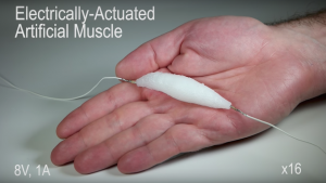 The electrically-actuated artificial muscle created by students from the University of Columbia in New York City