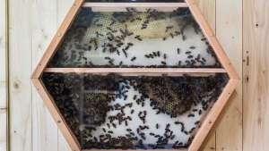 Beecosystem