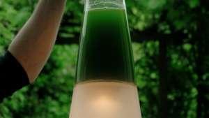 Latro Algae Lamp by Mike Thompson.