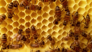 Flow: Honey on Tap